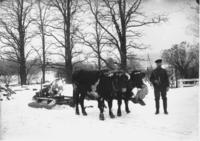 Edward Pratt and his Oxen with logs, in the snow, Dover, Vt.