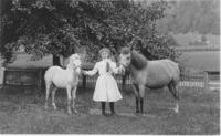 A girl with two ponies at Dr. Nasher's in Townshend, Vt.