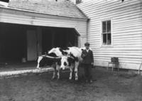 Wallace Johnson's Boy with your Oxen, Marlboro, Vt.