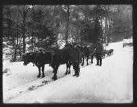 Cheney's Oxen in winter, Newfane, Vt.