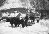 Kids using oxen for snow removal, Williamsville, Vt.