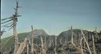 Dead trees on Mount Mansfield