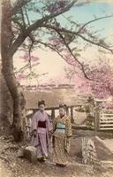 Two women under a blooming Sakura tree