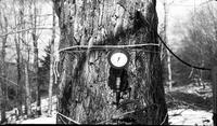 Gauge on tree