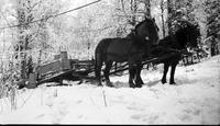 Horses pulling sleigh of maple sap collection supplies