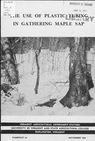 use of plastic tubing in gathering maple sap
