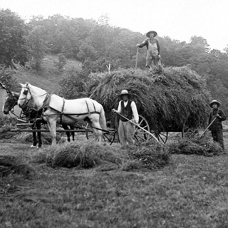 Hay Harvesting in the 1940's