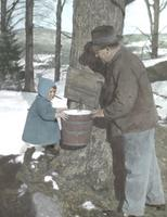 Where does sap come from?  Miss Florence Jones of Waitsfield and her Papa