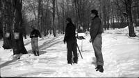 Workers surveying the sugar bush